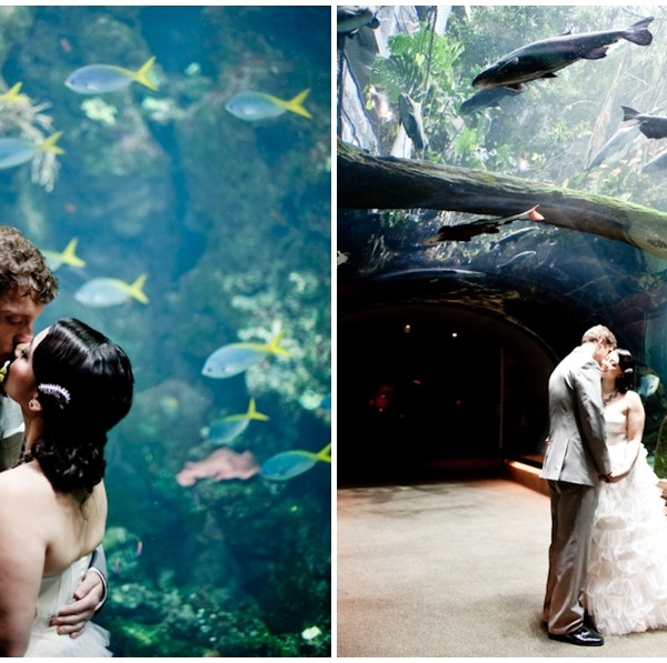 Wedding at the California Academy of Sciences, San Francisco. Kristine & Daniel.